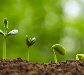 Seed-bud-plant-293x260