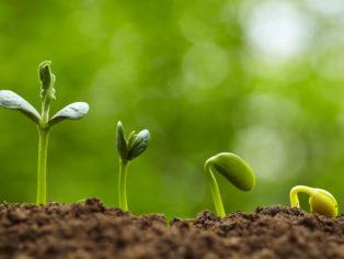 Seed-bud-plant-314x236
